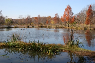 Beautiful Autumn Day at the Gardens