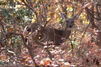 Whoa, its a deer!