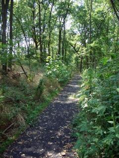 Quiet Nature Walk