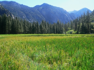 Sunny Kings Canyon Meadow