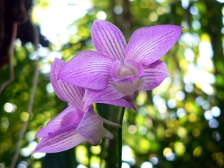 Uncle Owen's Orchids