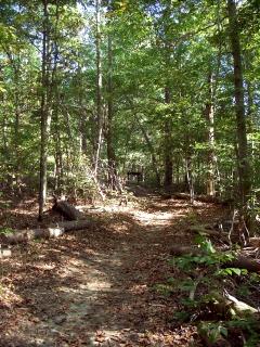 Piedmont Forest Trail