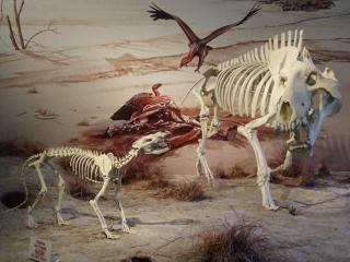 Veldt Scene at Agate Fossil Beds NM